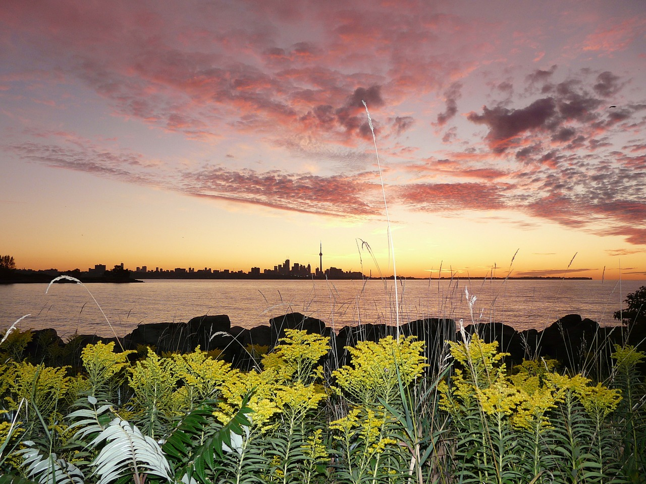Get soothing vibes in Toronto Islands